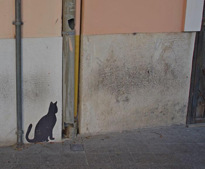 Кошка. Валенсия, Испания