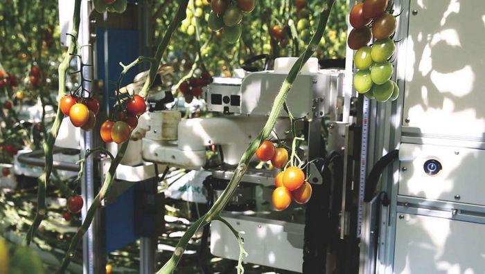 Tomato Harvesting Robot