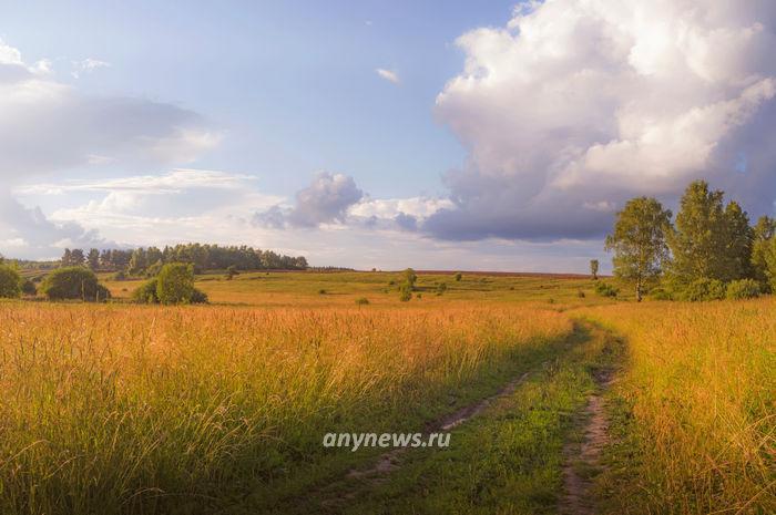 Золотой час на поле