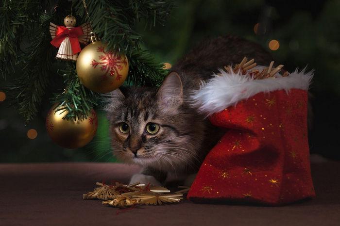 Шаблон новогодней открытки - кот